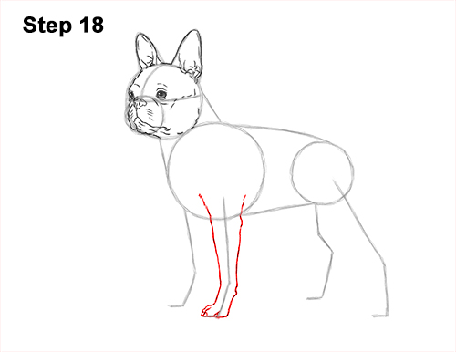 How to Draw a Boston Terrier Puppy Dog 18