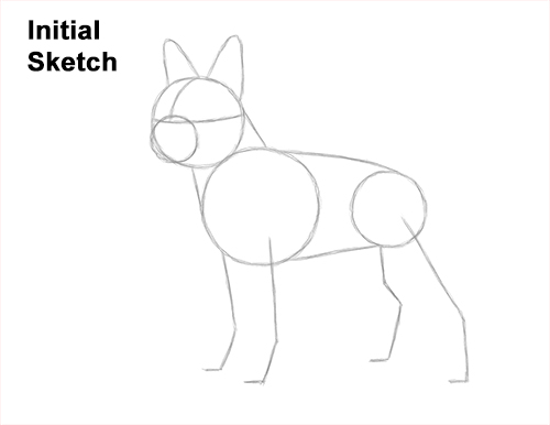 How to Draw a Boston Terrier Puppy Dog Guides Lines