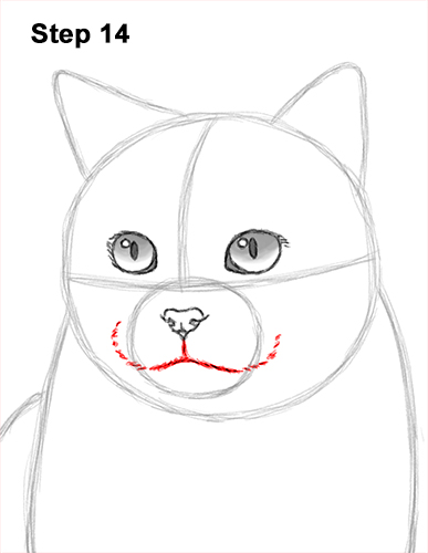 How to Draw British Blue Shorthair Cat Sitting 14