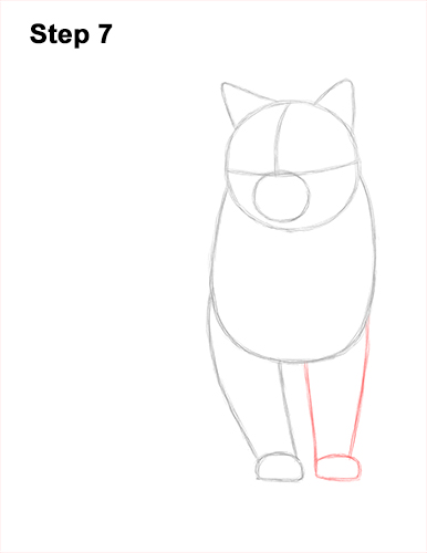How to Draw British Blue Shorthair Cat Sitting 7