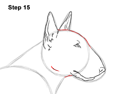 How to Draw a Bull Terrier Dog Puppy Side View 15