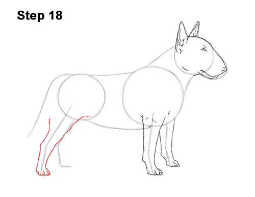How to Draw a Bull Terrier Dog Puppy Side View 18