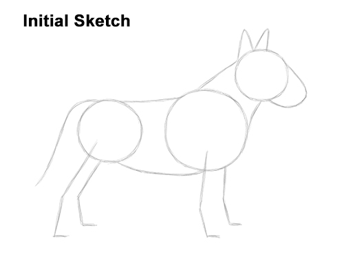 How to Draw a Bull Terrier Dog Puppy Side View Guide Lines