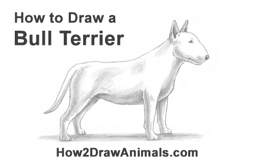 How to Draw a Bull Terrier Bully Dog Puppy Side View