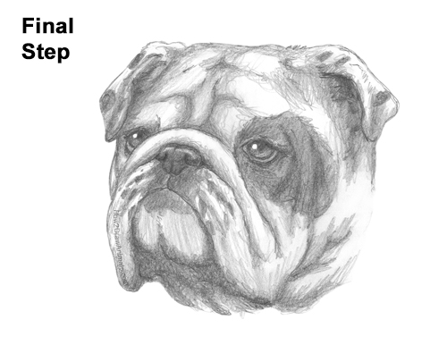 How to Draw a Bulldog Head Portrait Face