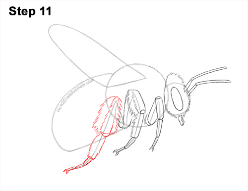 How to Draw a Bumblebee Bee Flying 11