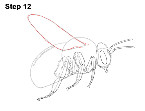 How to Draw a Bumblebee Bee Flying 12
