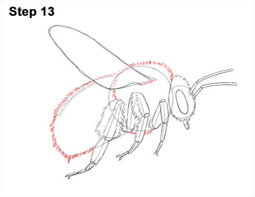 How to Draw a Bumblebee Bee Flying 13