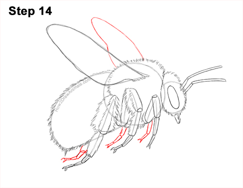 How to Draw a Bumblebee Bee Flying 14