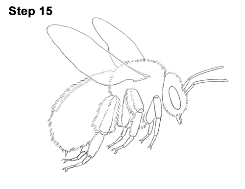 How to Draw a Bumblebee Bee Flying 15