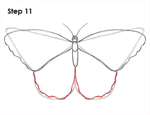 Draw Butterfly 11