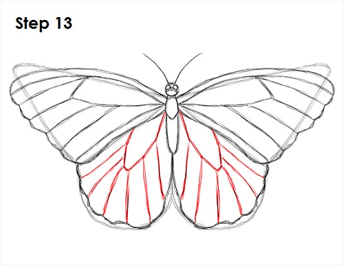 Draw Butterfly 13