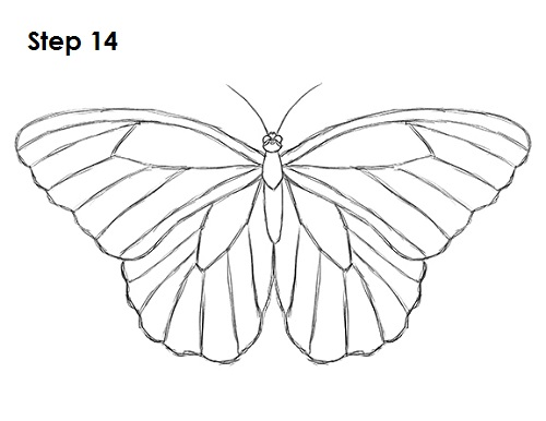 Draw Butterfly 14