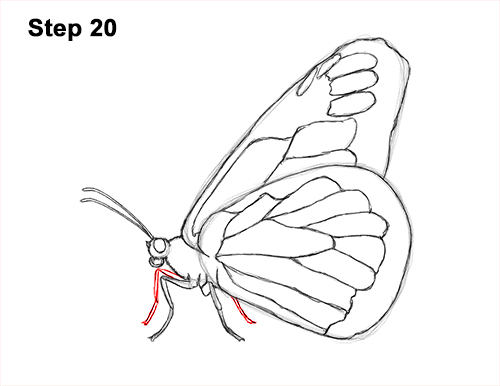 How to Draw a Monarch Butterfly Side Wings 20