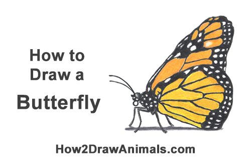 How to Draw a Monarch Butterfly Side Profile Color Insect Wings