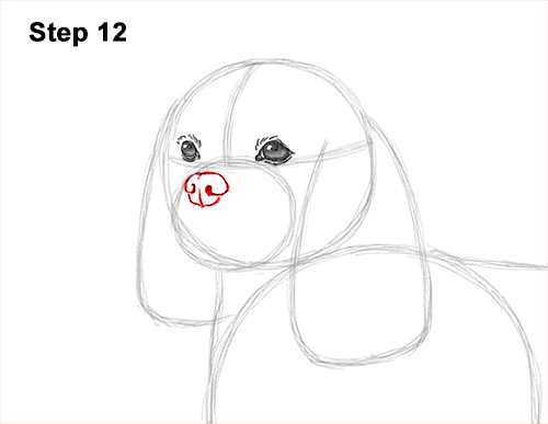 How to Draw a Cavalier King Charles Spaniel Puppy Dog 12
