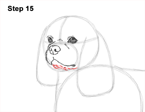 How to Draw a Cavalier King Charles Spaniel Puppy Dog 15