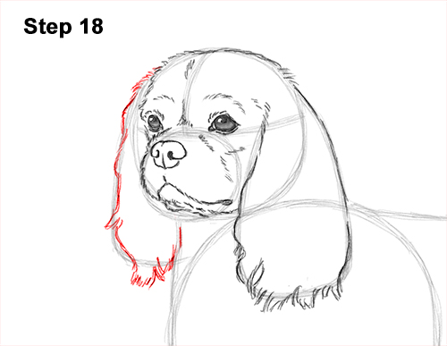 How to Draw a Cavalier King Charles Spaniel Puppy Dog 18