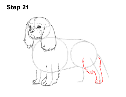 How to Draw a Cavalier King Charles Spaniel Puppy Dog 21