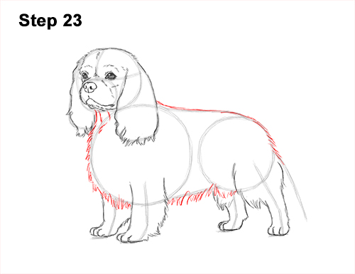 How to Draw a Cavalier King Charles Spaniel Puppy Dog 23
