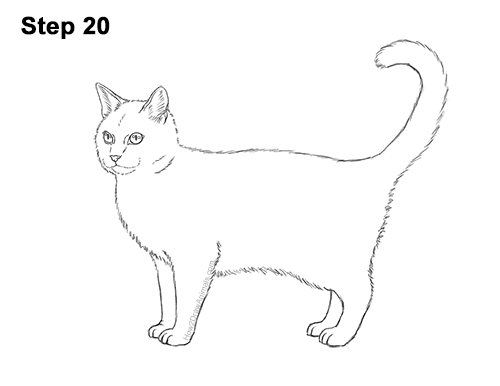 How to Draw a Calico Kitten Cat Orange Black 20