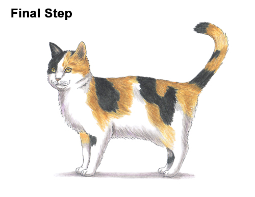 How to Draw a Calico Kitten Cat Orange Black Color