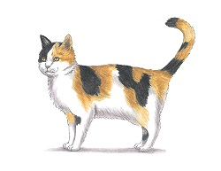 How to Draw a Cat Kitten Calico Color Orange Black