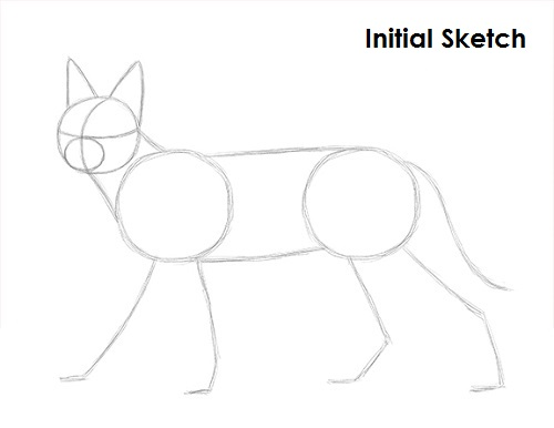Draw Caracal Sketch