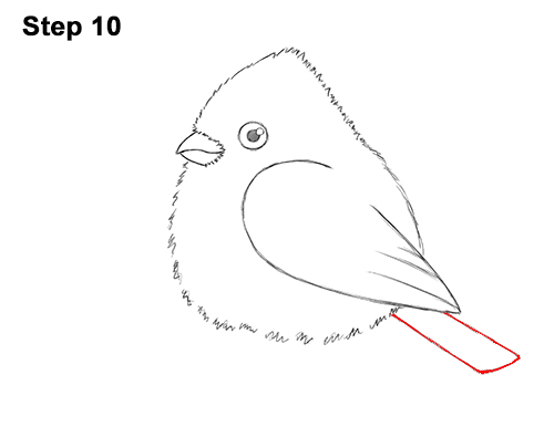 How to Draw Cute Little Cartoon Red Cardinal Snow Berries 10