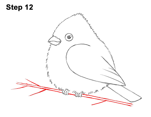 How to Draw Cute Little Cartoon Red Cardinal Snow Berries 12