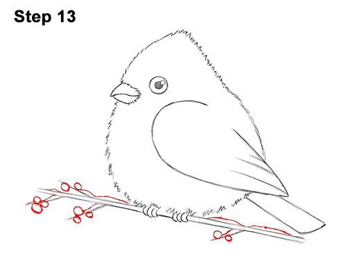 How to Draw Cute Little Cartoon Red Cardinal Snow Berries 13