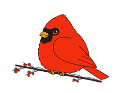 How to Draw a Red Cartoon Cardinal Snow Berries