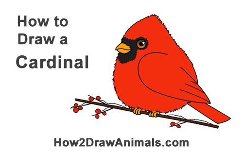 How to Draw Cute Little Cartoon Red Cardinal Snow Berries