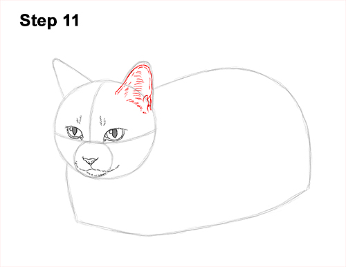 How to Draw a Tabby Kitty Cat Sitting Laying Roosting 11