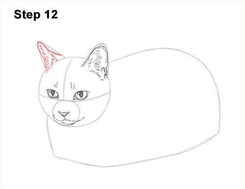 How to Draw a Tabby Kitty Cat Sitting Laying Roosting 12
