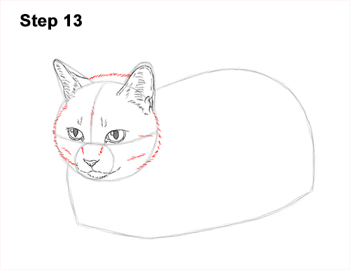 How to Draw a Tabby Kitty Cat Sitting Laying Roosting 13