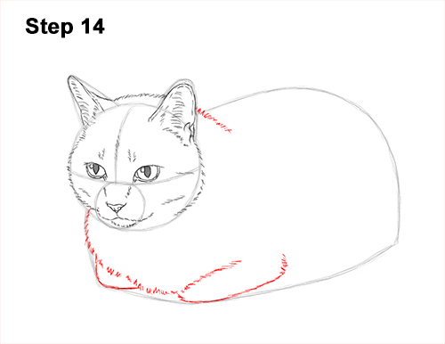 How to Draw a Tabby Kitty Cat Sitting Laying Roosting 14