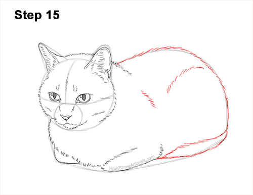 How to Draw a Tabby Kitty Cat Sitting Laying Roosting 15