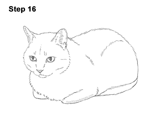 How to Draw a Tabby Kitty Cat Sitting Laying Roosting 16
