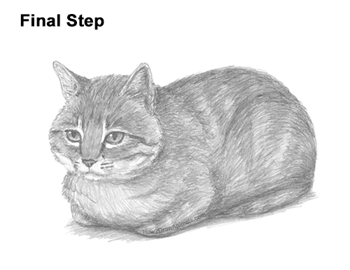 How to Draw a Tabby Kitty Cat Sitting Laying Roosting