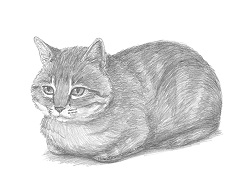 How to Draw a Tabby Cat Loaf Loafing Roosting Bread