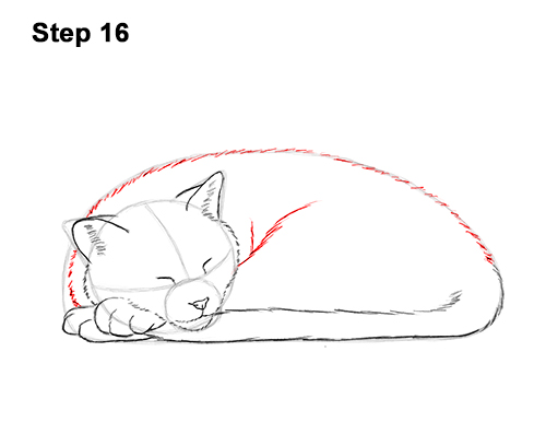 How to Draw a Cat Kitten Sleeping 16