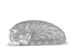 How to Draw a Cat (Sleeping)