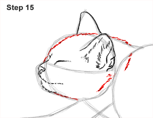 How to Draw a Tabby Kitten Cat Stretching 15