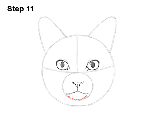 How to Draw a Tabby Kitty Cat Head Detail 11