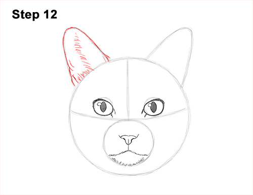 How to Draw a Tabby Kitty Cat Head Detail 12