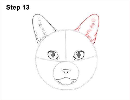 How to Draw a Tabby Kitty Cat Head Detail 13