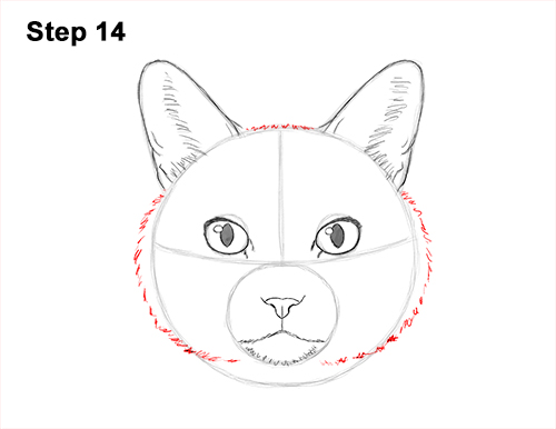 How to Draw a Tabby Kitty Cat Head Detail 14