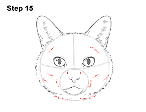 How to Draw a Tabby Kitty Cat Head Detail 15