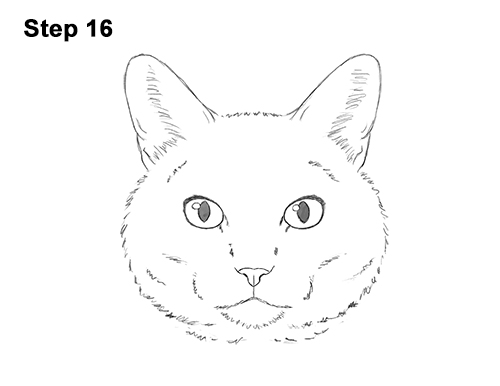 How to Draw a Tabby Kitty Cat Head Detail 16